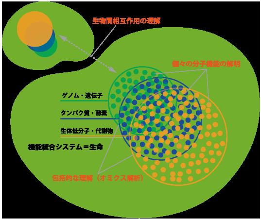 応用生命科学専攻 細胞代謝機能学研究室